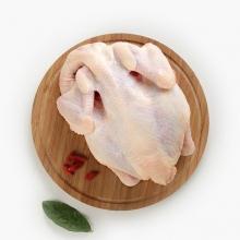 嘉陵区 好土优土芳香养殖法跑山鸡土鸡 一只
